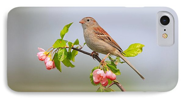 Field Sparrow On Apple Blossoms Phone Case by Daniel Behm