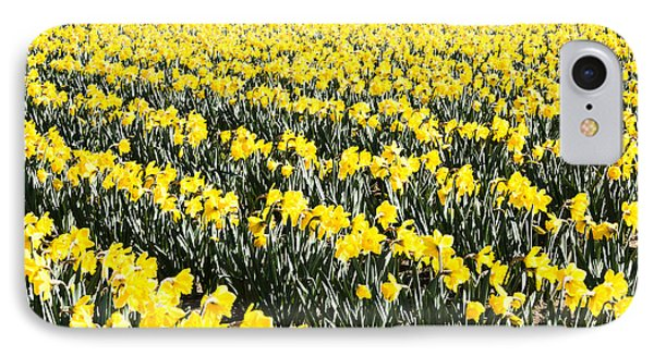 Fields Of Daffodils  IPhone Case