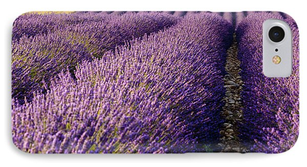 Fields Of Lavender IPhone Case by Brian Jannsen