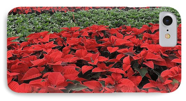 Fields Of Poinsettias IPhone Case by Peggy Stokes