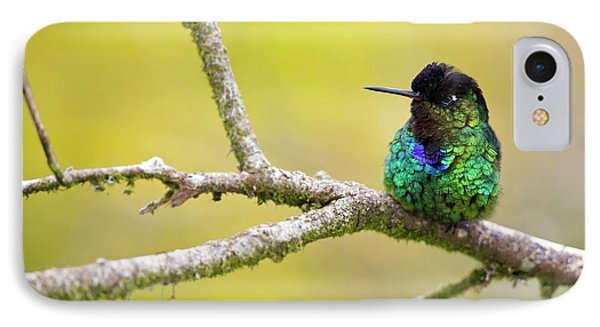 Fiery-throated Hummingbird IPhone Case by Nicolas Reusens