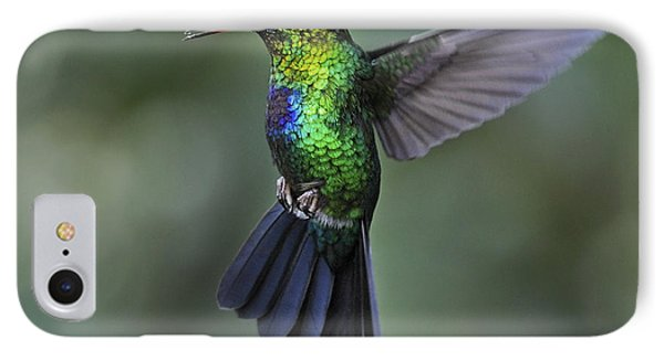Fiery-throated Hummingbird..  IPhone Case by Nina Stavlund