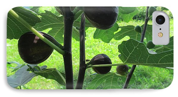 IPhone Case featuring the photograph Fig Leaves And Fruits by Tina M Wenger