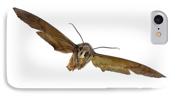 Fig Sphinx Moth IPhone Case