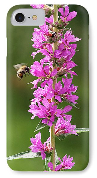 Final Approach - Bee On Purple Loosestrife IPhone Case
