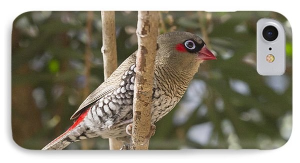 IPhone Case featuring the photograph Finch by Serene Maisey