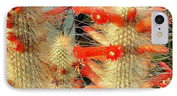 Firecracker Cactus IPhone Case by Marilyn Smith