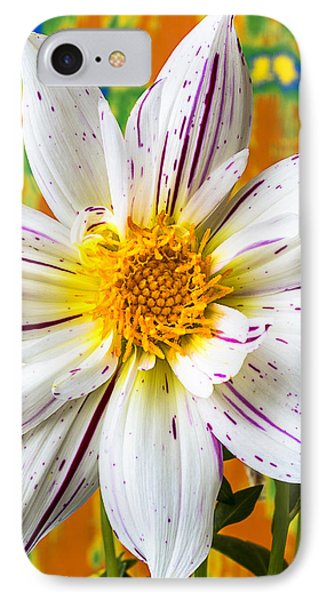 Fireworks Dahlia White And Pink Phone Case by Garry Gay