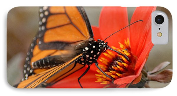 IPhone Case featuring the photograph First Monarch by Lena Wilhite