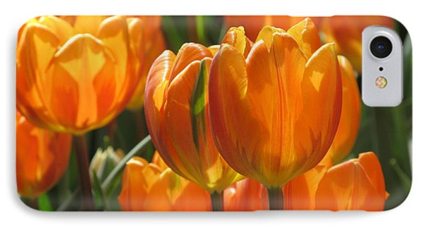 First Tulip Of Spring IPhone Case by Alfred Ng