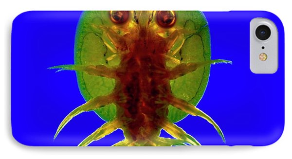 Fish Louse IPhone Case by Dr Keith Wheeler