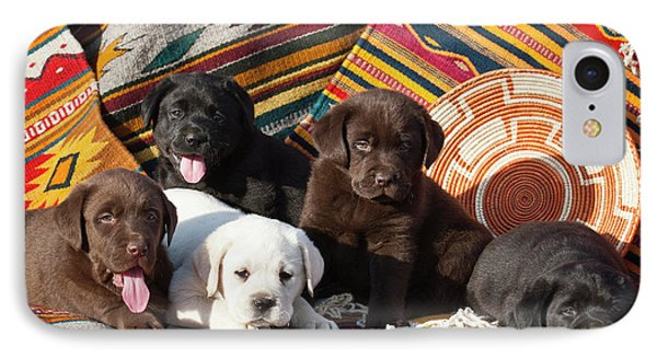 Five Labrador Retriever Puppies Of All IPhone Case