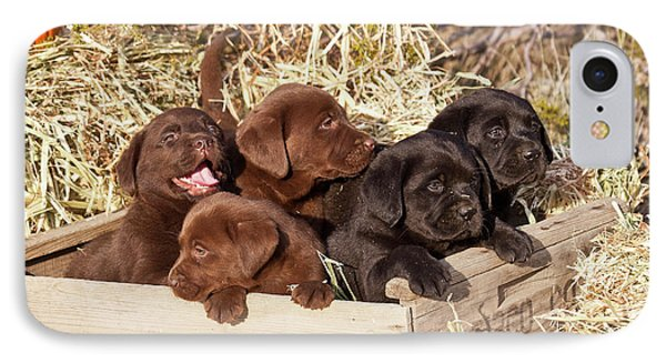 Five Labrador Retriever Puppies IPhone Case