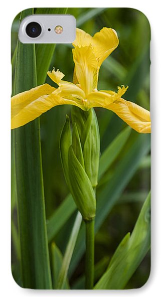 Flag Iris IPhone Case by David Isaacson