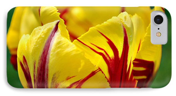 Flame Tulip IPhone Case by Kjirsten Collier