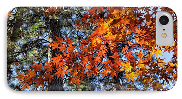Flaming Maple Beneath The Pines IPhone Case