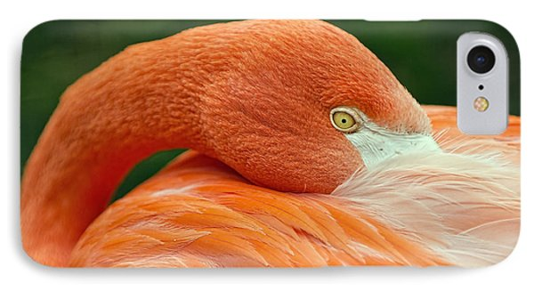 IPhone Case featuring the photograph Flamingo Closeup by RC Pics