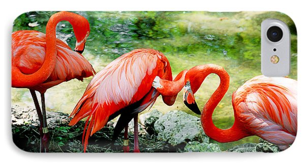 Flamingo Friends IPhone Case by Beverly Stapleton