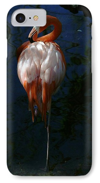 Flamingo In The Shadows IPhone Case by Myrna Bradshaw
