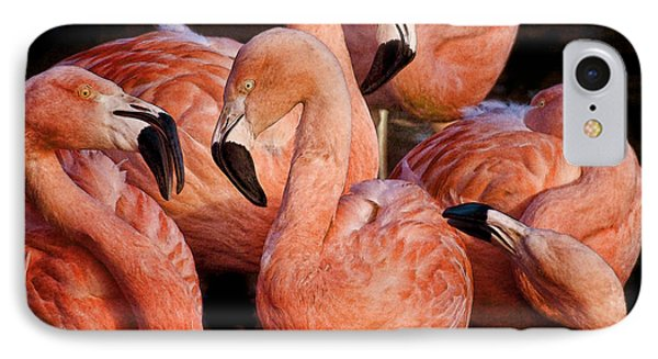 IPhone Case featuring the photograph Flamingo Lingo by Brian Tarr