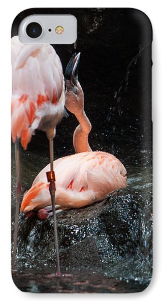Flamingo Love IPhone Case by Mike Lee
