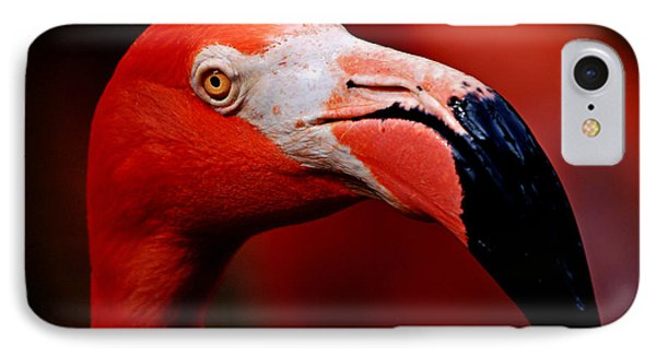 IPhone Case featuring the photograph Flamingo Portrait by Lorenzo Cassina