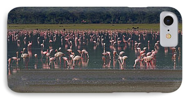 IPhone Case featuring the photograph Flamingos  - 16x66 by J L Woody Wooden