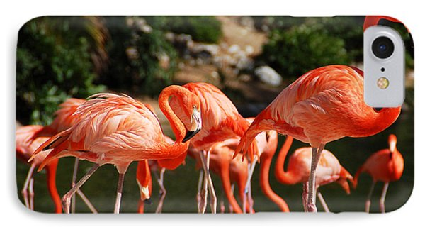 Flamingos IPhone Case by Aimee L Maher Photography and Art Visit ALMGallerydotcom