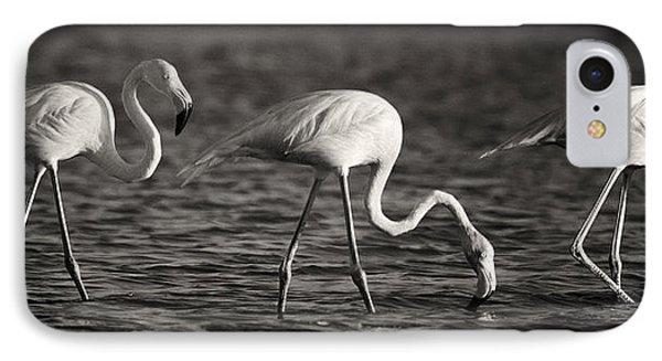 Flamingos Black And White Panoramic IPhone Case