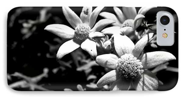 IPhone 7 Case featuring the photograph Flannel Flower by Miroslava Jurcik