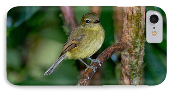Flavescent Flycatcher IPhone Case by Anthony Mercieca