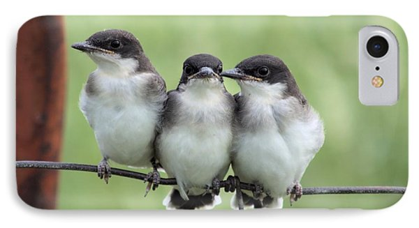 Fledged Siblings IPhone Case by Bonfire Photography