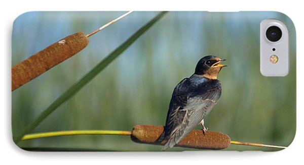 Fledgling Barn Swallow IPhone Case by James Peterson