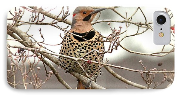 Flicker - Alabama State Bird - Attention IPhone Case