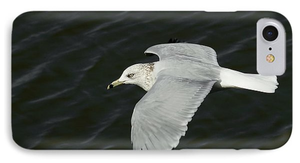 Flight Of The Gull IPhone Case by Ernie Echols