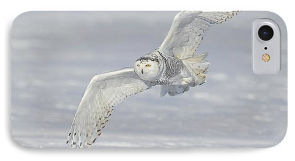 Flight Of The Snowy IPhone Case by Daniel Behm