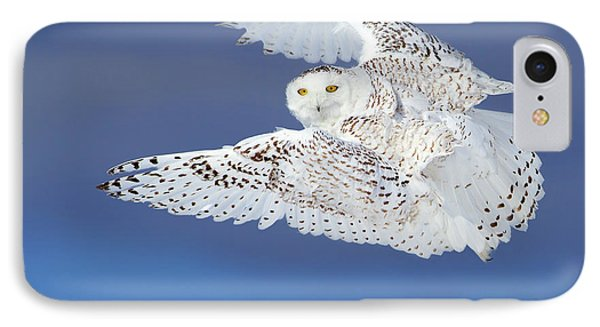 Flight Of The Snowy - Snowy Owl IPhone Case