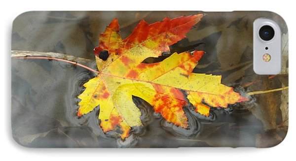 Floating Autumn Leaf IPhone Case by Erick Schmidt