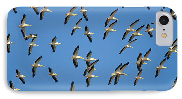 Flock Of Birds Flying In The Sky IPhone Case