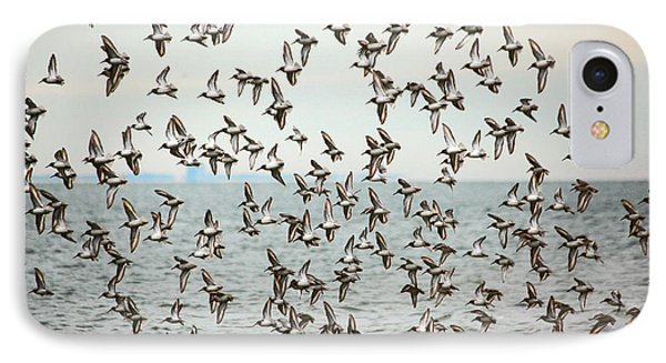 Flock Of Dunlin Phone Case by Karol Livote