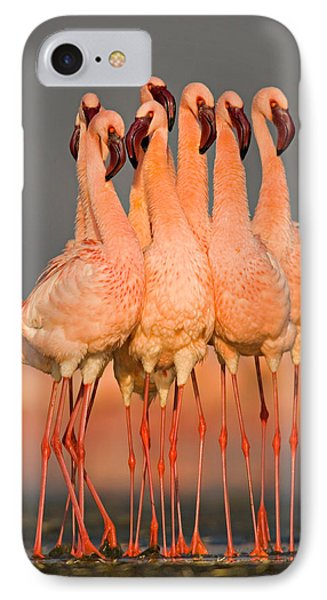 Flock Of Eight Flamingos Wading IPhone Case