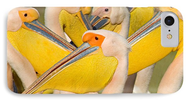 Flock Of Great White Pelicans, Lake IPhone Case