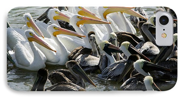 Flock Of Pelicans In Water, Galveston IPhone Case by Panoramic Images