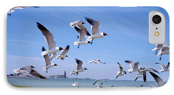 Flock Of Seagulls Flying On The Beach IPhone Case