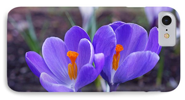 Floral Garden Purple Crocus Flower Art Prints IPhone Case by Baslee Troutman