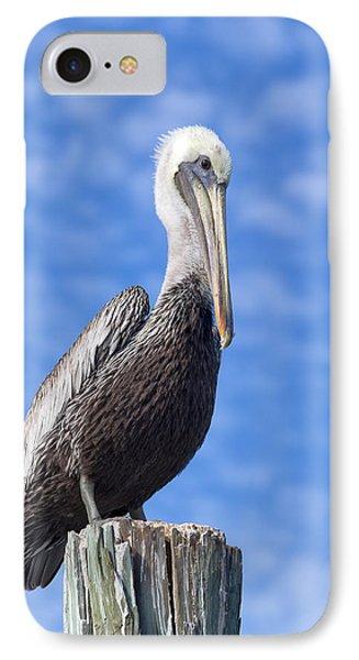 Florida Brown Pelican Phone Case by Kim Hojnacki