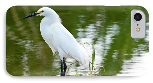 Florida, Immokalee, Snowy Egret Hunting IPhone Case