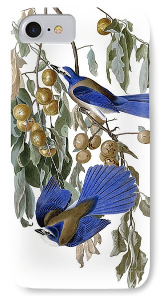 Florida Jay IPhone Case