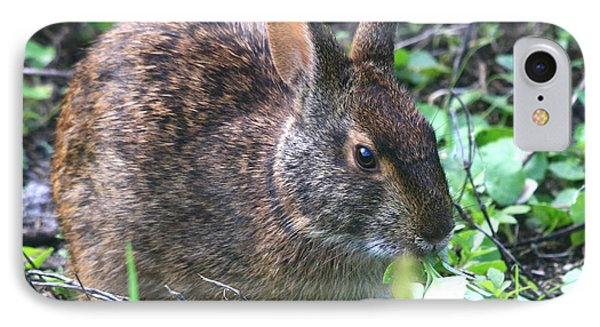 Florida Marsh Rabbit IPhone Case