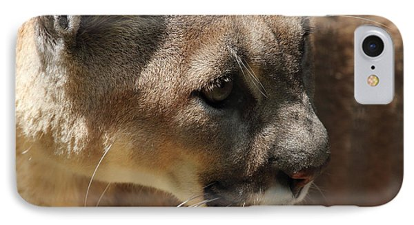IPhone Case featuring the photograph Florida Panther by Meg Rousher